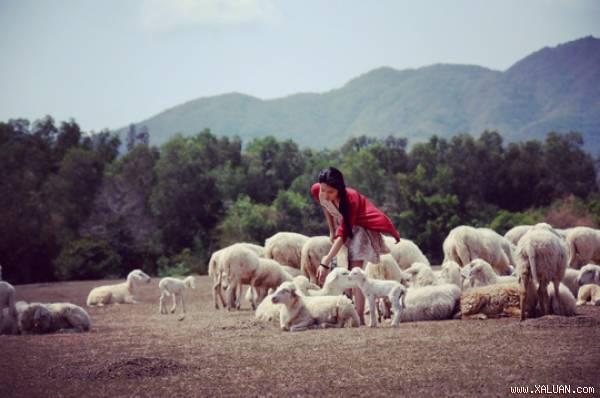 Giải mã sức hút của đồi cừu Vũng Tàu với giới trẻ